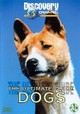 Ultimate Guide Dogs - ISBN: 8714576201571