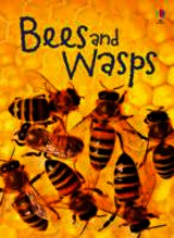 Bees And Wasps - Maclaine, James; Maclaine, James - ISBN: 9781409544876