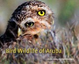 Bird Wildlife Of Aruba - Peterson, Gregory - ISBN: 9789460223730