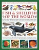 Illustrated Encyclopedia Of Fish & Shellfish Of The World - Beer, Amy-Jane; Hall, Derek; Gilpin, Daniel - ISBN: 9780754820710