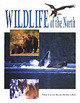Wildlife Of The North - Kazlowski, Steve - ISBN: 9780888395900